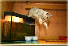 Гостиница для кошек номер Люкс